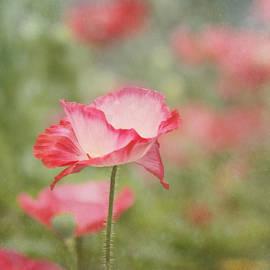 Kim Hojnacki - Pink Poppy