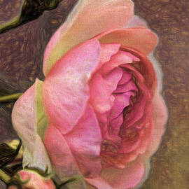 Leif Sohlman - Pink rose imp 1 - artistic pink rose with buddies