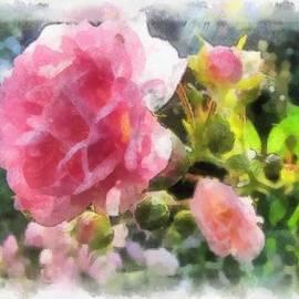 Pink Roses by Maciek Froncisz