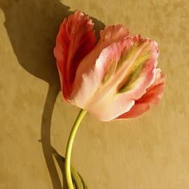 Chris Berry - Pink Splendor