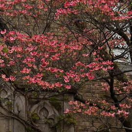 Georgia Mizuleva - Pink Spring - Dogwood Filigree and Lace