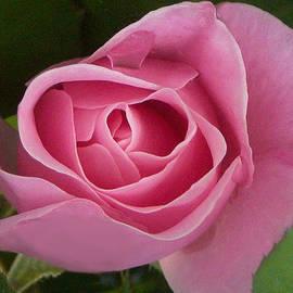 Susan Eileen Evans - Pink