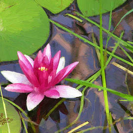 Pink Water Lily by Doug Kreuger