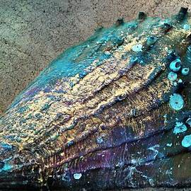 Pinnidae AKA Pen Shell by Barbara Chichester