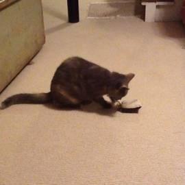 #pixie Still Loves Her #catnip Toy That