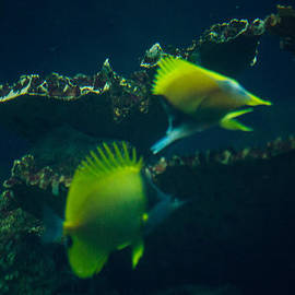 Playing Tag Along The Reef by JG Thompson