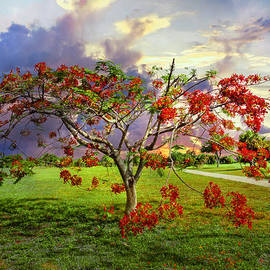 Debra and Dave Vanderlaan - Poinciana Tree