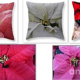 Dora Sofia Caputo Photographic Design and Fine Art - Poinsettias - A Collage