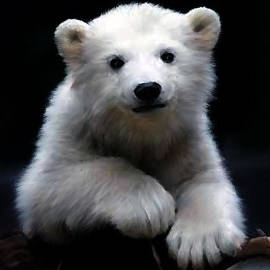 Polar Baby by Shere Crossman