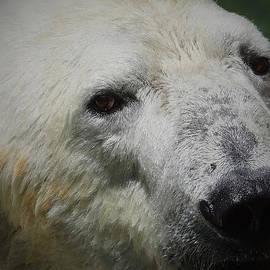 Ernie Echols - Polar Bear