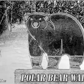 LeeAnn McLaneGoetz McLaneGoetzStudioLLCcom - Polar Bear Walk