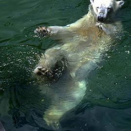 Gary Gingrich Galleries - PolarFloating