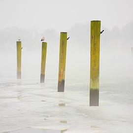 Poles by Karol Livote