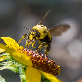 Pollen Seeker by Allen Lefever
