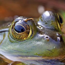 Pond Celebrity by Juergen Roth