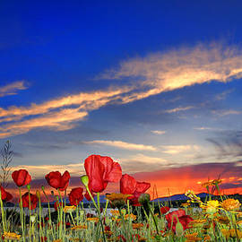 Guido Montanes Castillo - Poppies at sunset