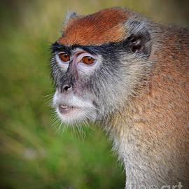 Jim Fitzpatrick - Portrait of an Adult Patas Monkey