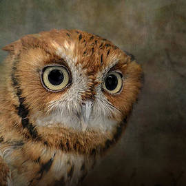 Jai Johnson - Portrait of An Eastern Screech Owl