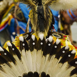 Pow Wow Tail Feathers by Bob Christopher