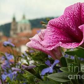 Katerina Vodrazkova - Prague in bloom VI - summer edition