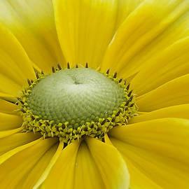 David Freuthal - Prairie sun