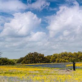 Prairies and Rolling Meadows of Texas in Springtime - Wildflowers blooming in Stockdale by Silvio Ligutti