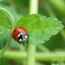 Debra Thompson - Praying Ladybug