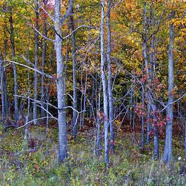 Preparing for Fall by Susan Crossman Buscho