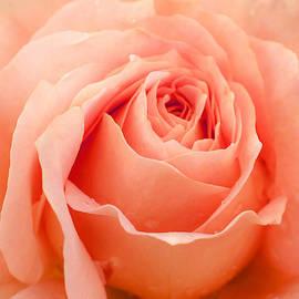 Pretty in Pink by Jordan Blackstone