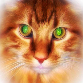 Red Maine Coon Cat Portrait by Femina Photo Art By Maggie