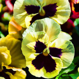 Pretty Pansies by Jeanne May