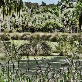 Princess Place Swamp by Alice Gipson