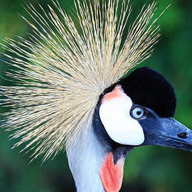 Trina  Ansel - Profile of the Crowned Crane
