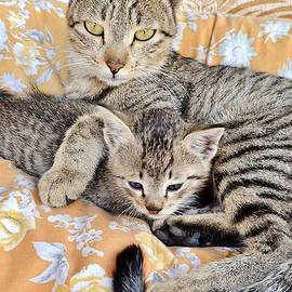Kim Bemis - Proud Mother Cat and Her Kitten