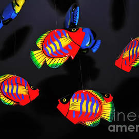 Psychedelic Flying Fish