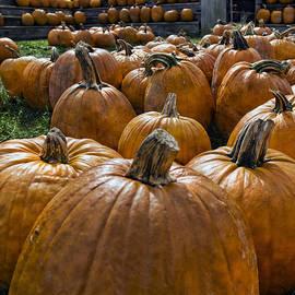 Peter Chilelli - Pumpkin Farm