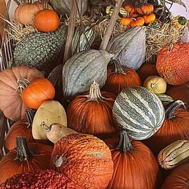 Dora Sofia Caputo Photographic Design and Fine Art - Pumpkins and Gourds
