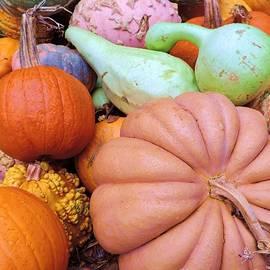 Robert ONeil - Pumpkins and Gourds