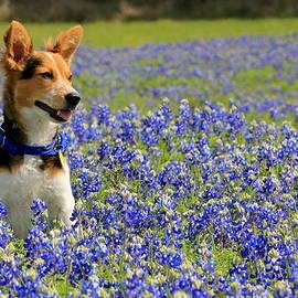 Pup in the Bluebonnets by Lisa Reid