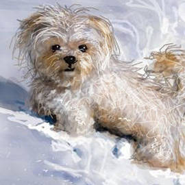 Puppy in Snow  by Angie Braun