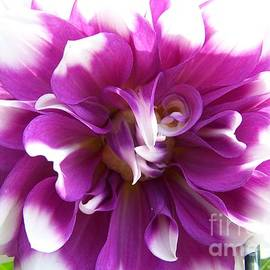 Stephanie Hanson - Purple Dahlia