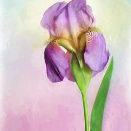 Purple Iris by David and Carol Kelly