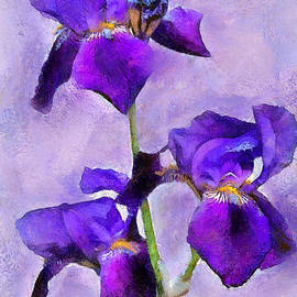 Gene Healy - Purple Irises - painted