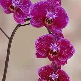 Purple Orchids  by Lena Photo Art