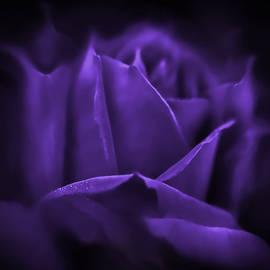 Purple Rose Flower Mystery by Jennie Marie Schell
