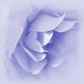 Jennie Marie Schell - Purple Rose Flower Tranquillity