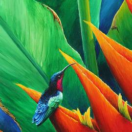 Purple-throated Carib and heliconia by Christopher Cox