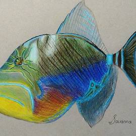 Queen Triggerfish by Savanna Paine