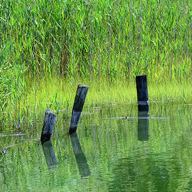 Quiet green waters Connecticut saltwater marsh  by Marianne Campolongo