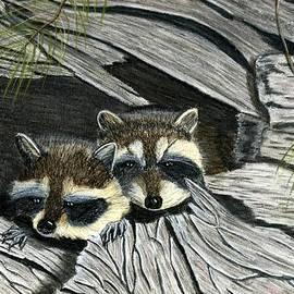 Jay Johnston - Raccoon in Log